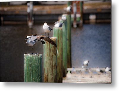Florida Seagull Playing Metal Print by Jason Moynihan