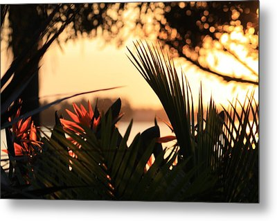 Florida Sunrise Metal Print by Diane Merkle
