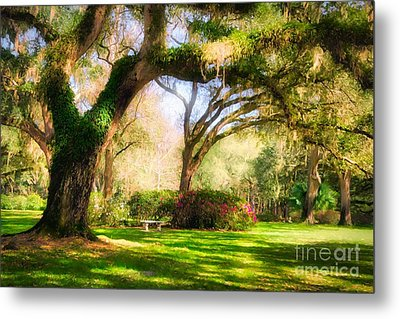 Metal Print featuring the photograph Florida Sunshine by Mel Steinhauer