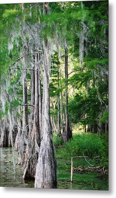 Florida Swamps Metal Print by Peter  McIntosh