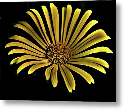 Flower 1 Metal Print by Lawrence Christopher
