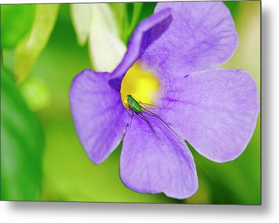 Flower And Grasshopper-st Lucia Metal Print