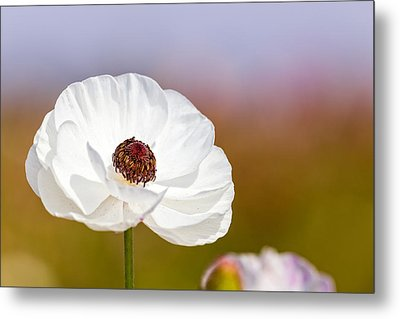 Flower  Metal Print by Antonio Castillo
