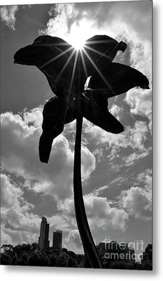 Metal Print featuring the photograph Flower Art by Zawhaus Photography