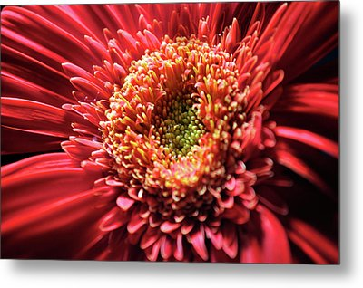 Metal Print featuring the photograph Flower Burst by Sheryl Thomas
