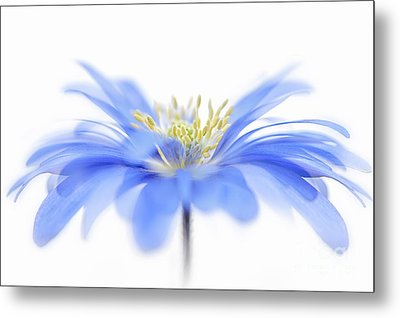 Flower Fountain Metal Print by Jacky Parker