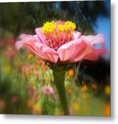 Flower Garden Metal Print by Dottie Dees