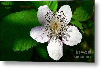 Metal Print featuring the photograph Flower In Shadow by Larry Keahey