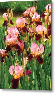 Flower - Iris - Gy Morrison Metal Print by Mike Savad