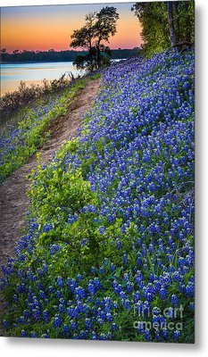 Flower Mound Metal Print