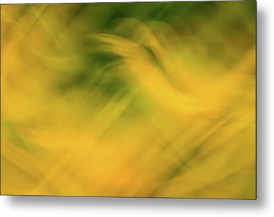 Flower Of Fire 4 Metal Print