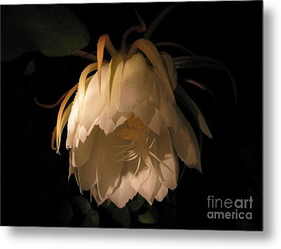 Flower Of The Night 02 Metal Print by Andrea Jean
