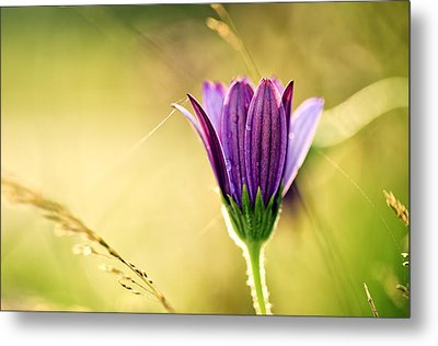 Flower On Summer Meadow Metal Print by Nailia Schwarz