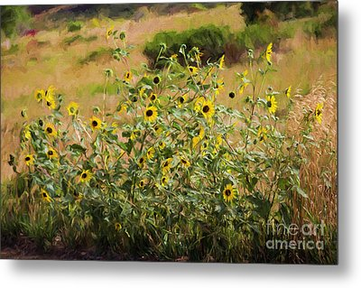 Flower Or Weed? Metal Print by Jon Burch Photography