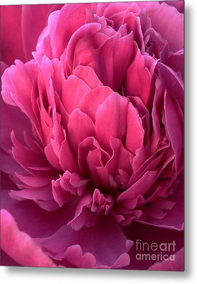 Flower Petals Metal Print by Ramneek Narang