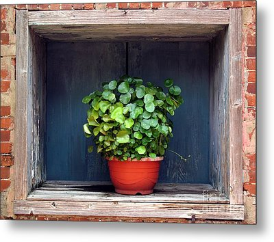 Flower Pot In A Window Metal Print by Yali Shi