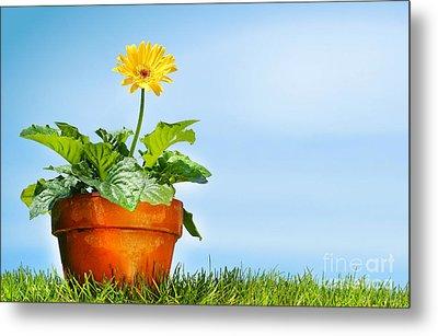 Flower Pot On The Grass Metal Print by Sandra Cunningham