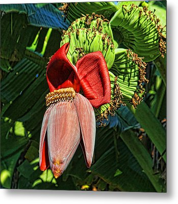 Flower Power Metal Print by HH Photography of Florida