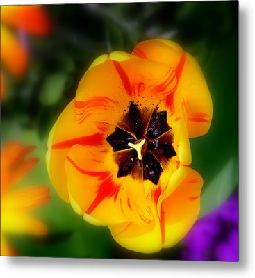 Metal Print featuring the photograph Flower Power by Martina  Rathgens