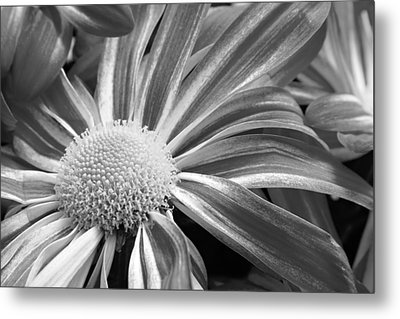 Flower Run Through It Black And White Metal Print by James BO  Insogna