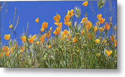 Metal Print featuring the photograph Flower Trail Diamond Valley Lake by Cliff Wassmann