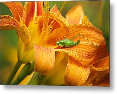 Flower With Company Metal Print by Christina Rollo
