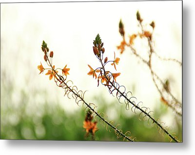 Metal Print featuring the photograph Flowering In Israel At The Sunset by Yoel Koskas