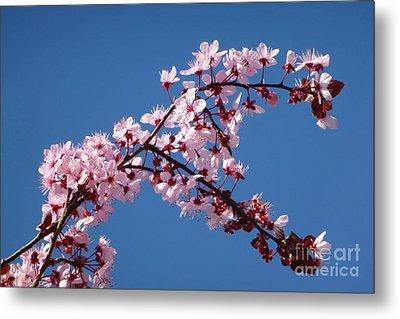 Flowering Of The Plum Tree 4 Metal Print by Jean Bernard Roussilhe