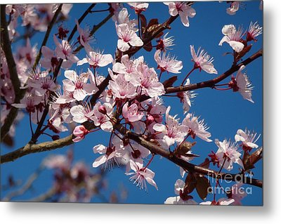 Flowering Of The Plum Tree 5 Metal Print by Jean Bernard Roussilhe
