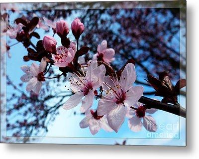 Flowering Of The Plum Tree 6 Metal Print by Jean Bernard Roussilhe