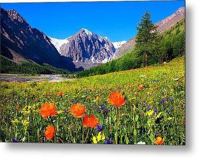 Flowering Valley. Mountain Karatash Metal Print