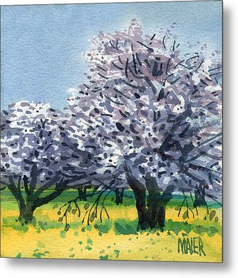 Flowering Walnut And Mustard Metal Print by Donald Maier