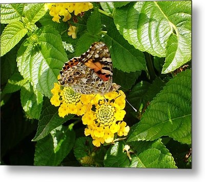 Flowers And Butterfly Metal Print by Gonca Yengin
