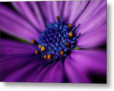Metal Print featuring the photograph Flowers And Sand by Darren White