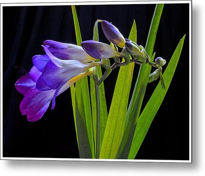 Flowers Backlite. Metal Print