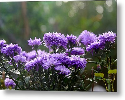 Metal Print featuring the photograph Flowers Edition by Bernd Hau