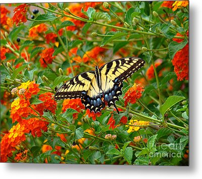 Flowers For Butterflies Metal Print by Sue Melvin