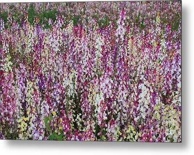 Flowers Forever Metal Print by Carol Groenen