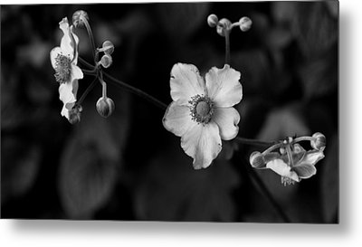 Flowers In Black And White Metal Print by Edward Myers