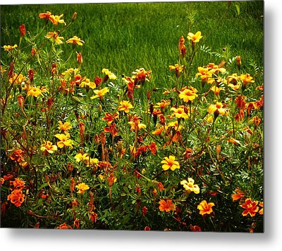 Flowers In The Fields Metal Print by Joseph Frank Baraba