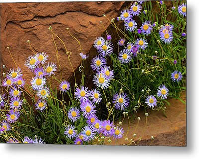 Flowers In The Rocks Metal Print by Darren White