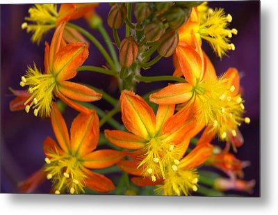 Flowers Of Spring Metal Print by Stephen Anderson