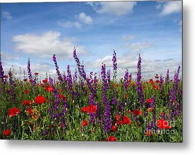 Flowers Of The Field Metal Print by Diana Kraleva