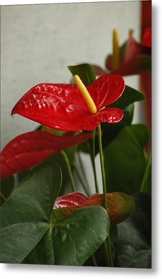 Metal Print featuring the photograph Flowers Rising by Lori Mellen-Pagliaro