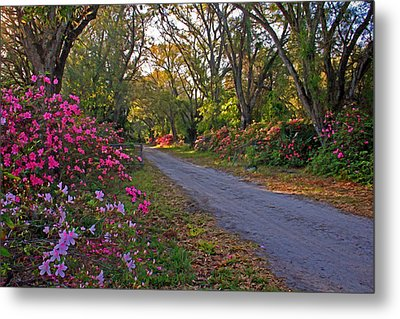 Flowers - Spring Fling Metal Print by HH Photography of Florida