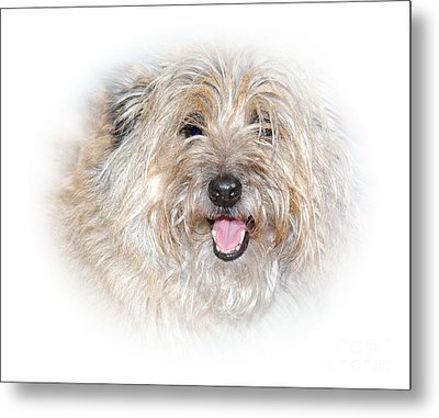Metal Print featuring the photograph Fluff Pup by Debbie Stahre