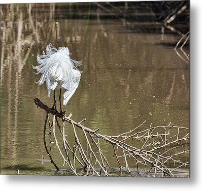 Metal Print featuring the photograph Fluff Time by Bill Kesler
