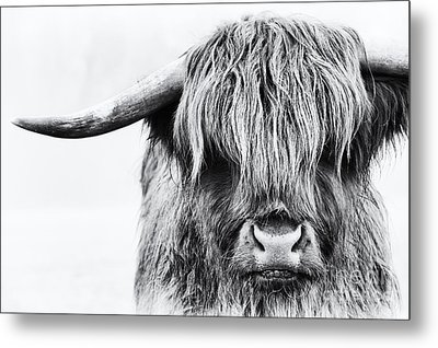 Fluffys Mate Metal Print by Tim Gainey