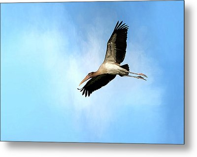 Fly By 2 Metal Print