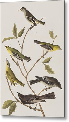 Fly Catchers Metal Print by John James Audubon